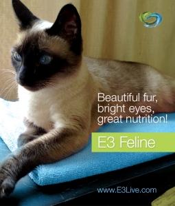 e3_feline_sammie_coat_2